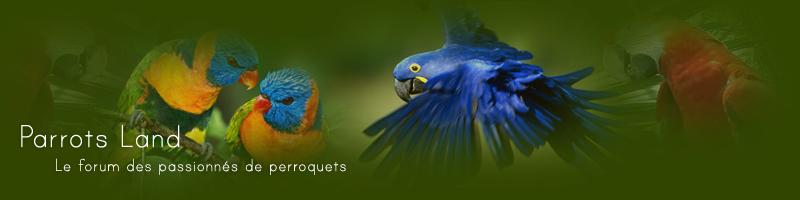 parrots-land, la passion des pioux Index du Forum
