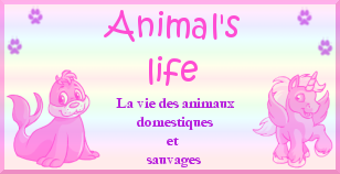 Animal's life Index du Forum